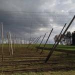 hops_hallertau_bavaria_munich_hopfengarten